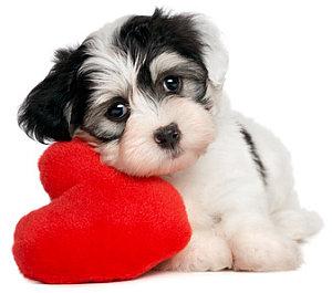 Hund mit Herz