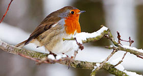Tiere im Winter: Strategien gegen Hunger