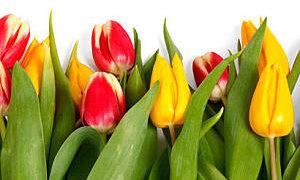 Die besten Glückwünsche zu Ostern