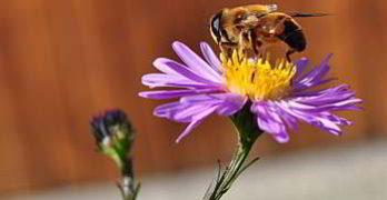 Bienenstich – Erste Hilfe Tipps
