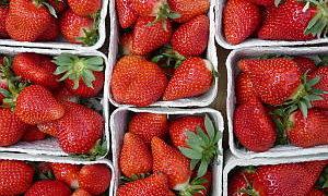 erdbeer-salat-balsamico