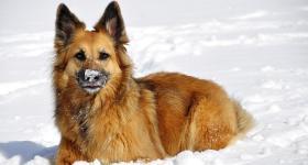 Hunde und Erkältung