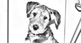 foto-in-zeichnung-umwandeln-vorschau