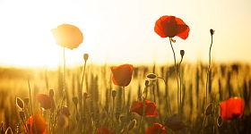 Hausmittel gegen Sonnenbrand – Die besten Tipps