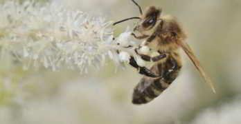 ➤ 5 Tipps: Wie kann man Bienen helfen?