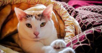 Abnehm-Tipps für Haustiere