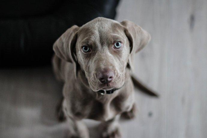 welcher-hund-passt-zu-mir1